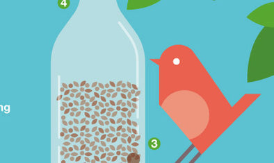 make your own bird feeder illustration of bird