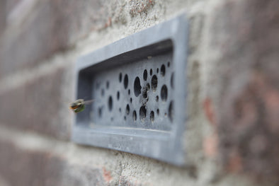 leafcutter heading into imperfect bee brick solitary bee house