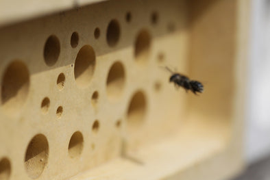 Which colour bricks do bees prefer? A study.