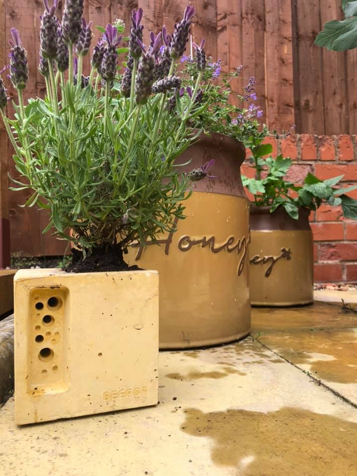 beepot solitary bee house in yellow planted with bee friendly lavender