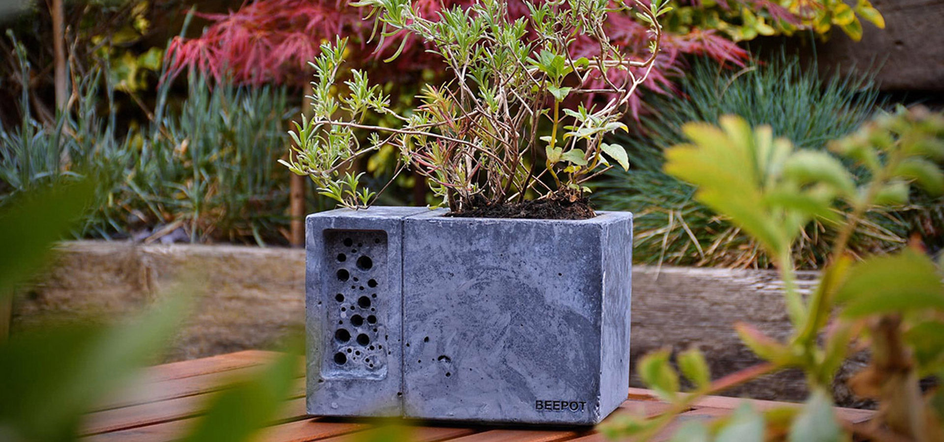 Beepot with wildlife friendly planting