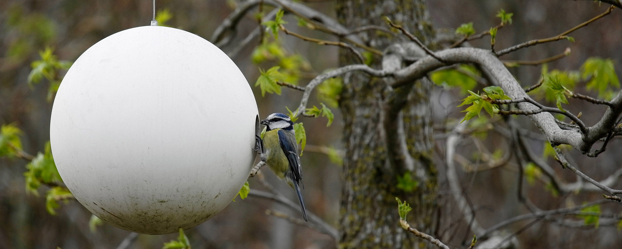 Blue tit on birdball birdhouse nesting birds
