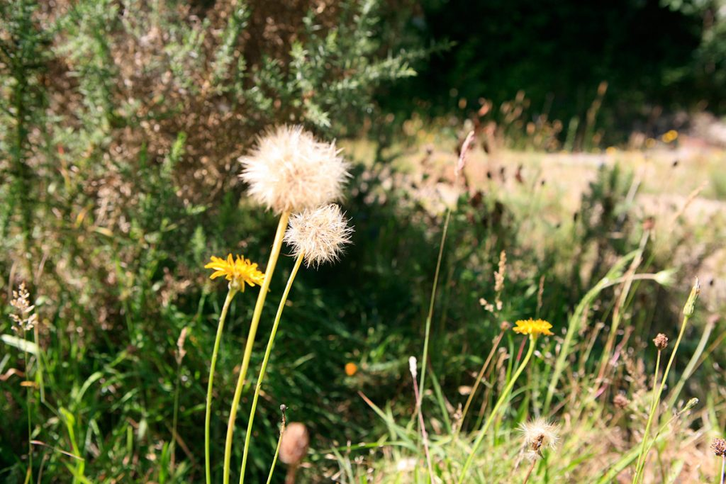 loss of green spaces and plants like dandelions