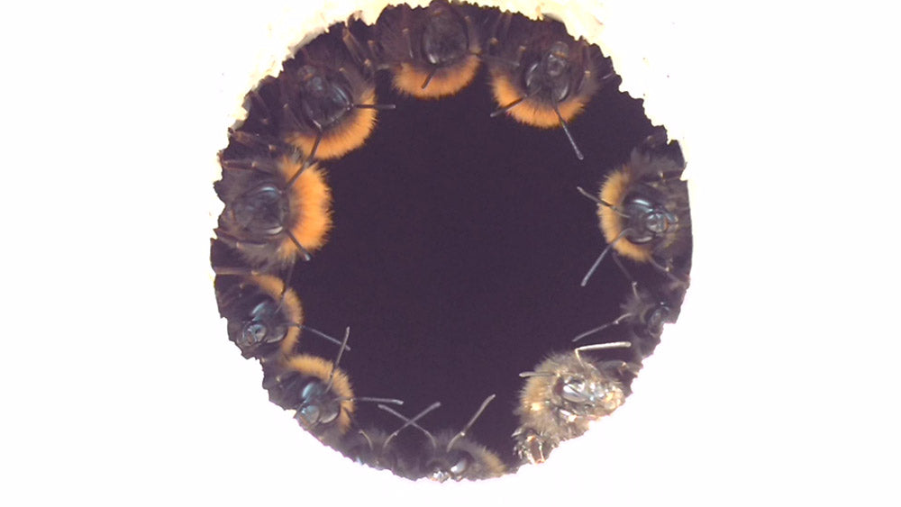 bees in a bee nest by green and blue