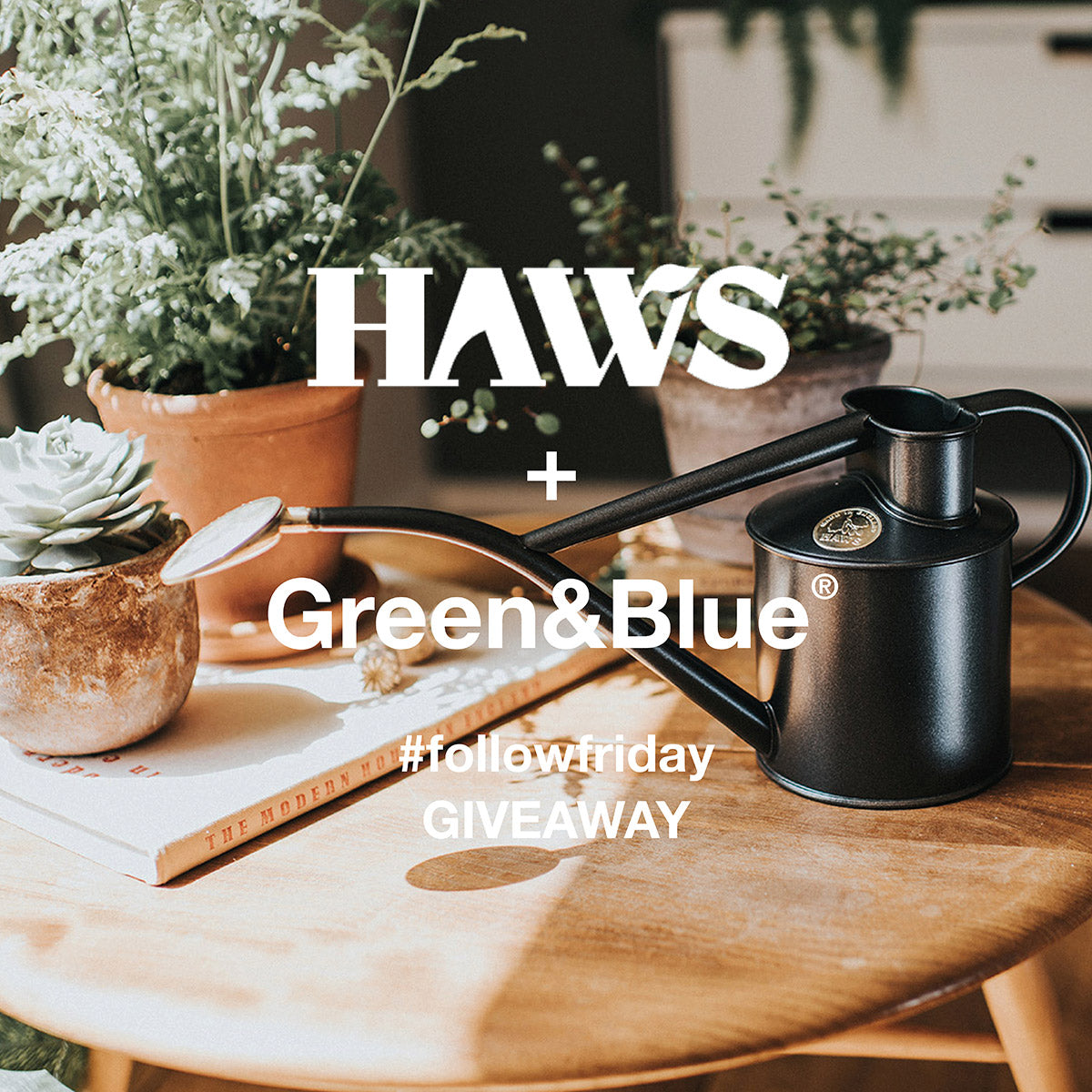 Haws follow friday competition