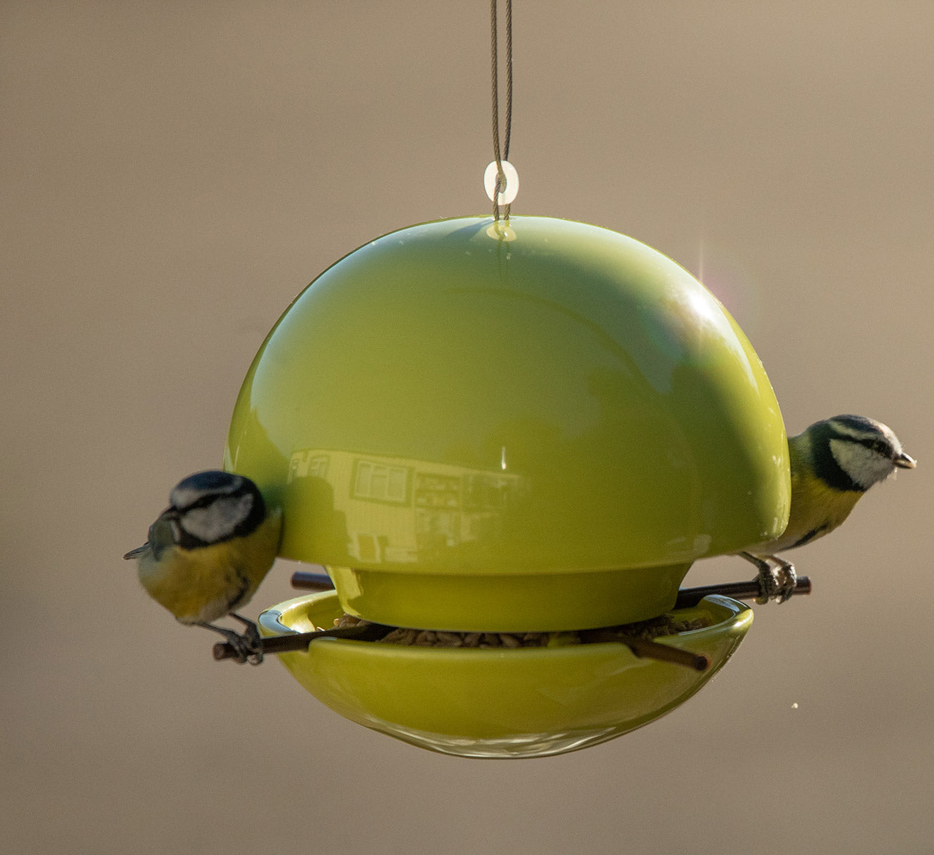 birds on Green&Blue lime seed feeder for birdwatch