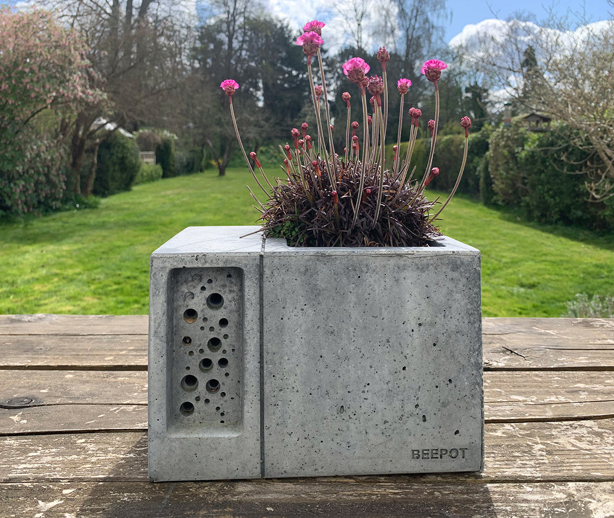 scabious bee friendly planting in charcoal beepot solitary bee house and planter
