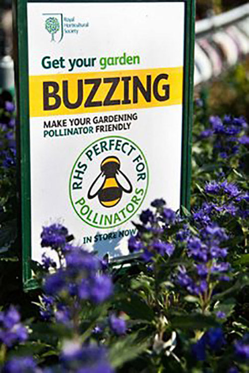 Plants-for-Pollinators-logo_WSYD0017293