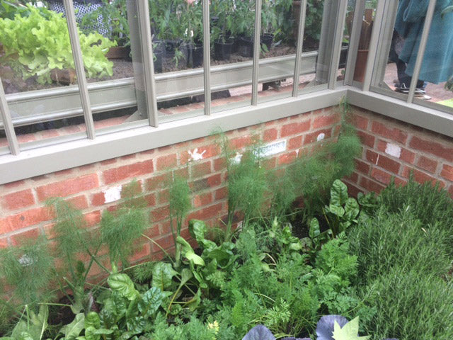 a greenhouse example in a rustic garden