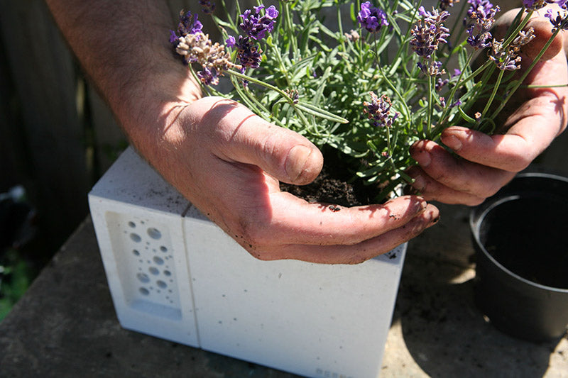 bee-friendly-planting-concrete-bee-hotel