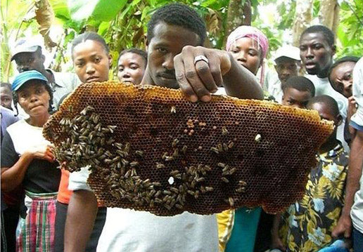 bees for development in action