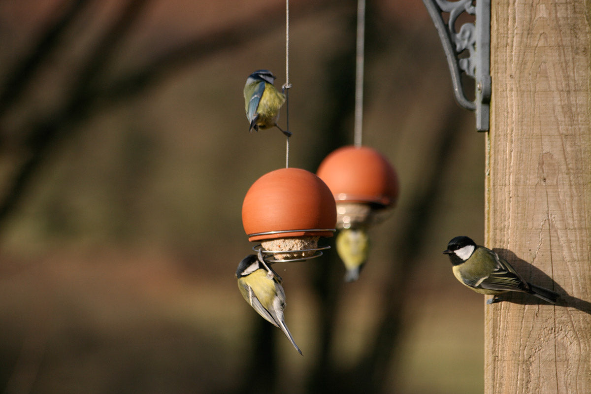 Birdball belle feeders with fat balls