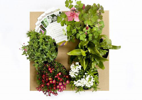 bloombox urban gardening plants