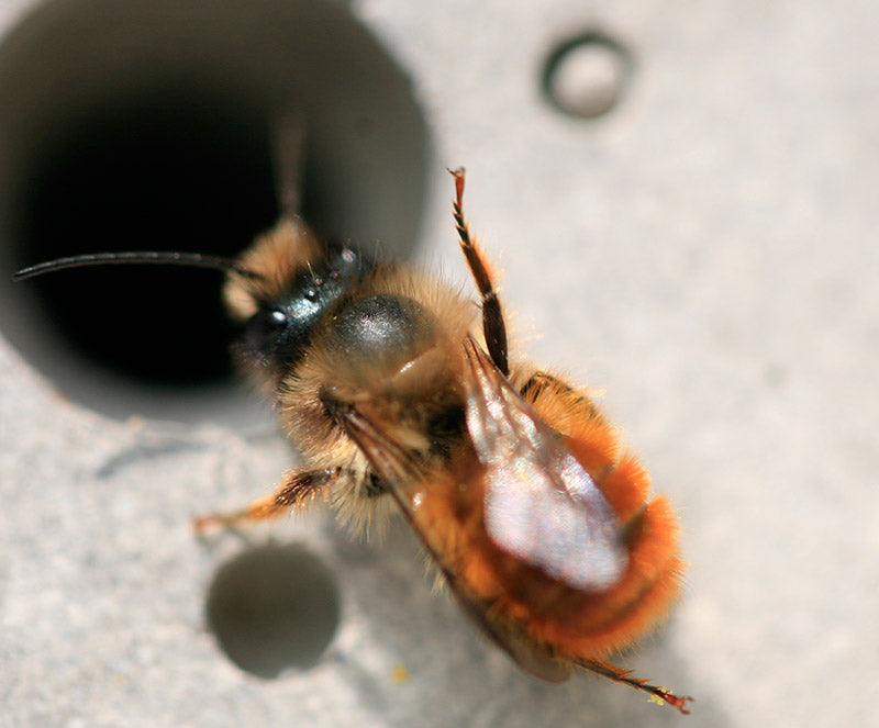 photos of bees breakdancing bee by green and blue
