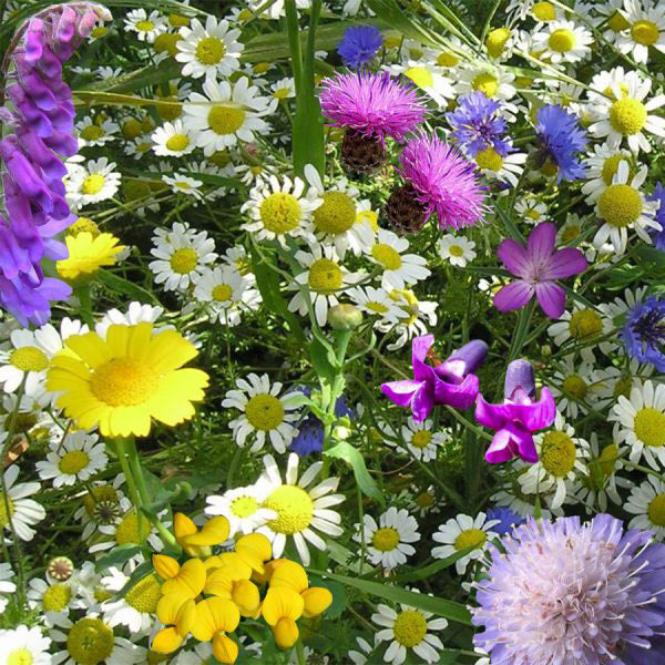 urban wildflowers for urban spaces