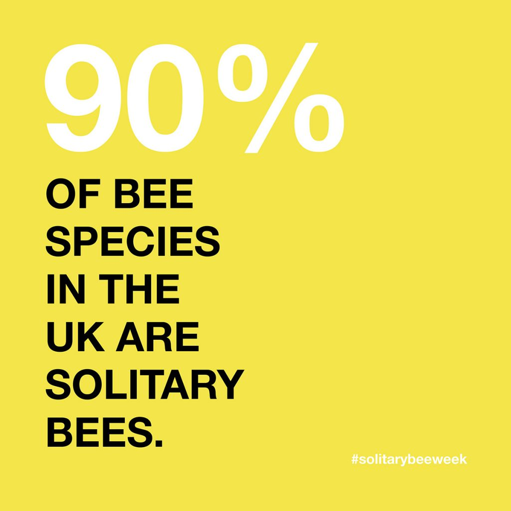 Solitary BEe Week campaign image 90% of bee species fact