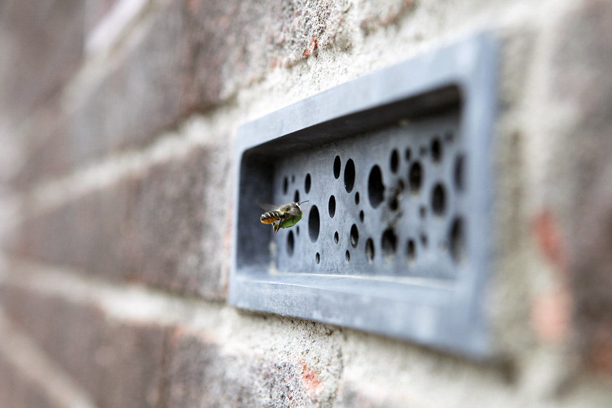 leafcutter solitary bee in retrofit bee brick