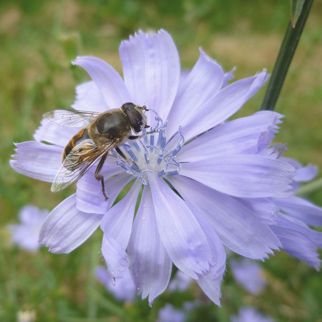 purple-flower-with-bee-block