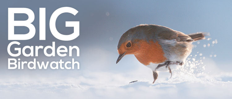 robin in the snow with text to say the Big Garden Birdwatch