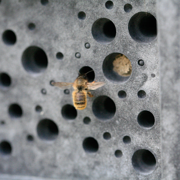 Solitary bee hovering on a Green&Blue Bee Brick bee house