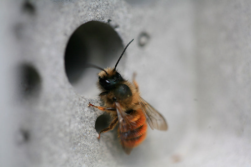 solitary bee on bee hotel by green and blue