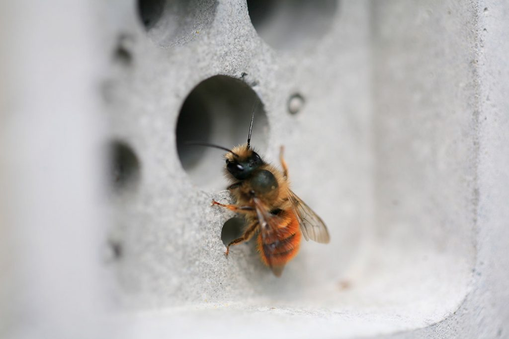 red mason bee on a bee brick by green and blue
