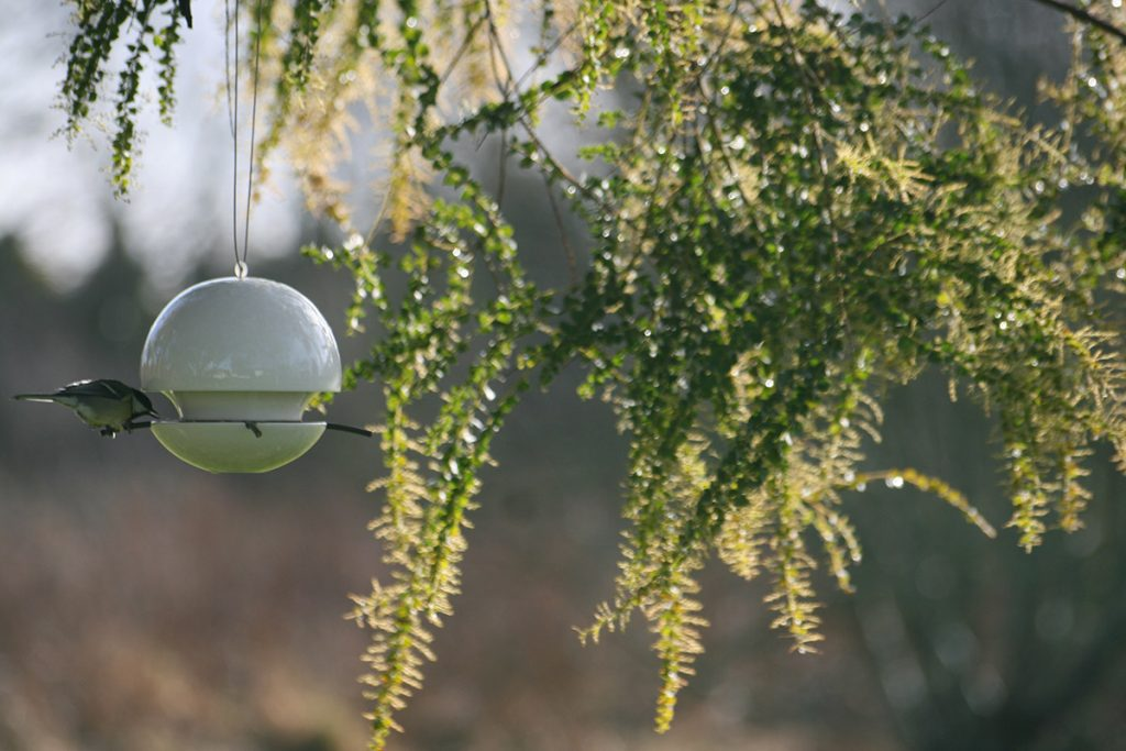 blue tit and white seed feeder by Green&Blue
