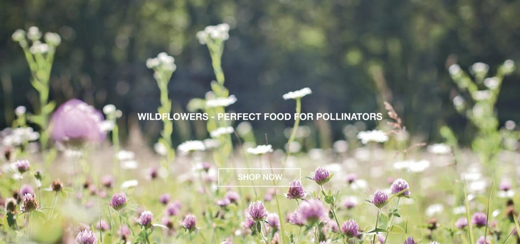 wildflower seeds for pollinators