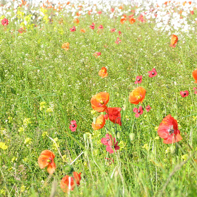 wildflowers free of neonics