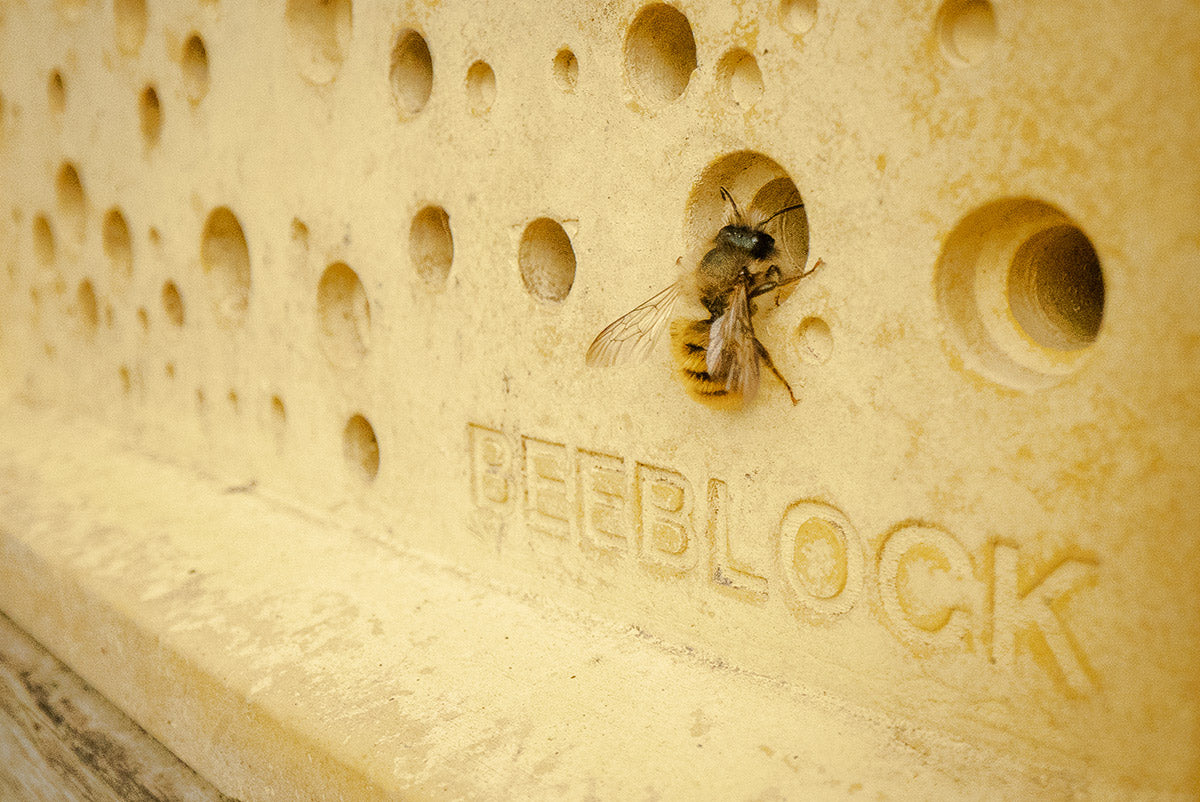 World Bee Day bees Block with solitary bee