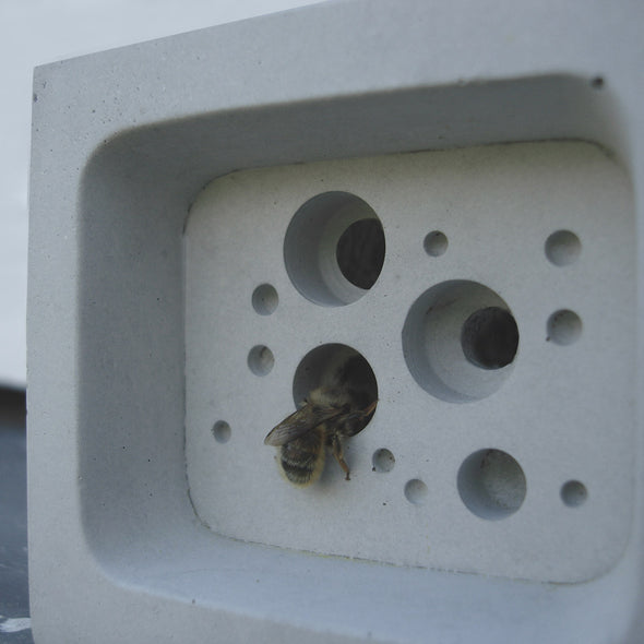 solitary bee nesting in small bee block