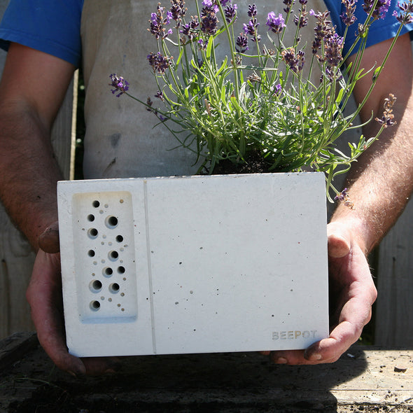 beepot bee house concrete planter