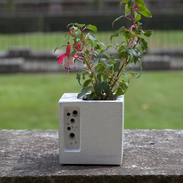 concrete planter and bee house with fuscia planted