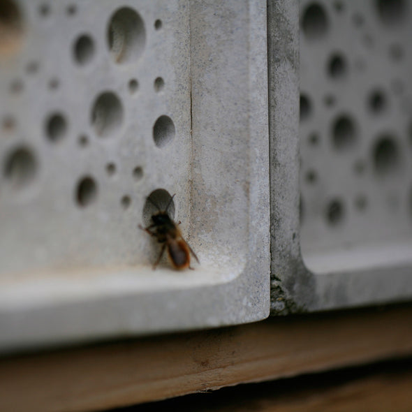 solitary bee on seconds bee bricks
