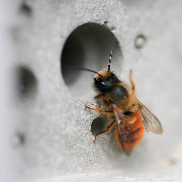 solitary bee on bee brick bee house