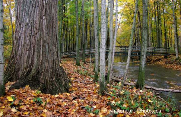 Coldstream Conservation Area fall, Ontario