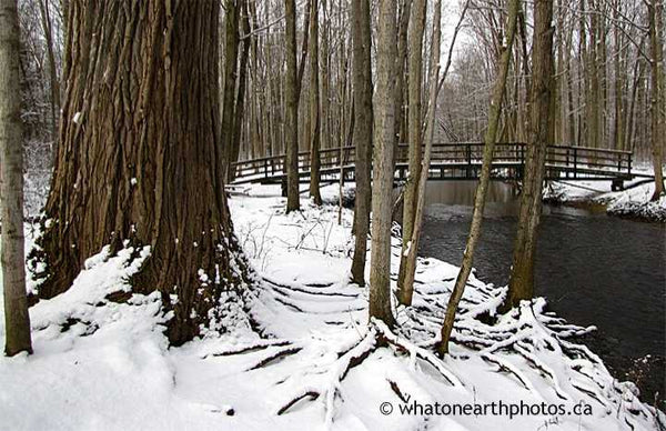 Coldstream Conservation Area winter, Ontario