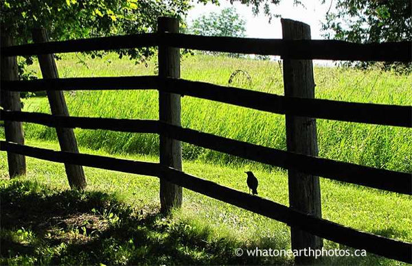 The grass is always greener..., Hastings County, Ontario