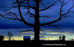a tree of night, Middlesex County, Ontario