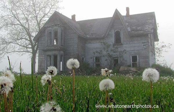 abandoned house gone to seed, near Palmyra, Ontario
