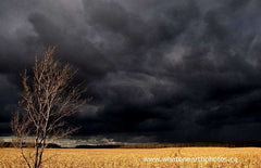 black sky, yellow corn, Middlesex, Ontario
