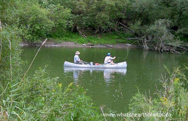 fly-fishing, Thames River, London, Ontario