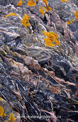 lichen on rock, Grand Manan Island