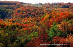 fall colour, Eugenia, Ontario