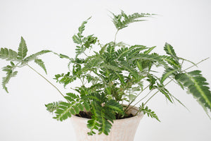 Fern & Vtg Speckled Pedestal Planter