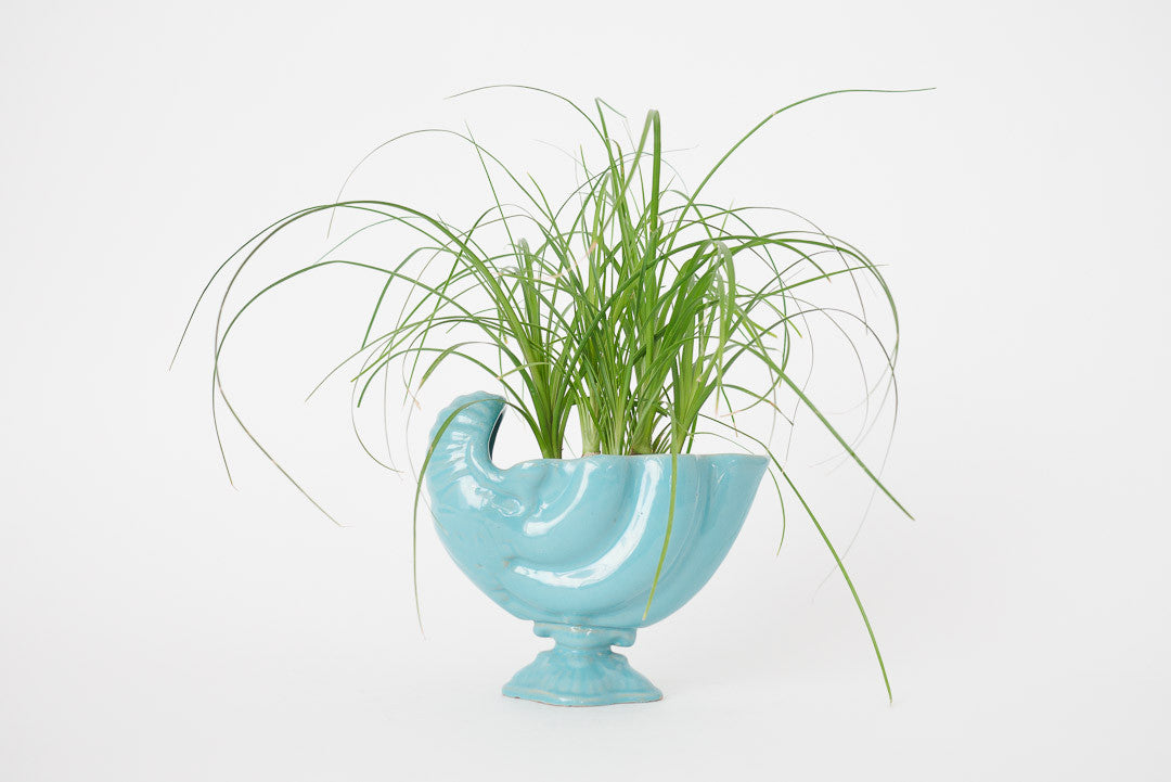 Ponytail Palm & Vtg Shell Planter