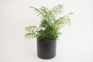 "8"" Pot / Planter - Matte Black Cylinder"