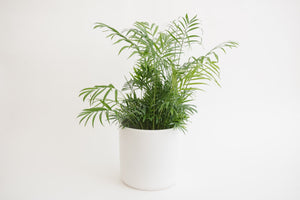 "8"" Pot / Planter - Matte White Cylinder"