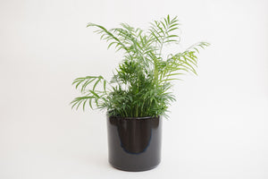"8"" Pot / Planter - Gloss Black Cylinder"