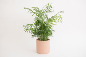 "6"" Pot / Planter - Terra Cotta Cylinder"